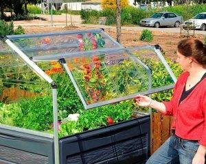 Palram - Canopia   Estufa de Jardim Plant Inn em Policarbonato para cultivo de plantas 5